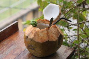shelter-cafe-bali-coconut