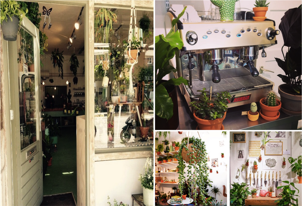 Wildernis is the greenest concept store