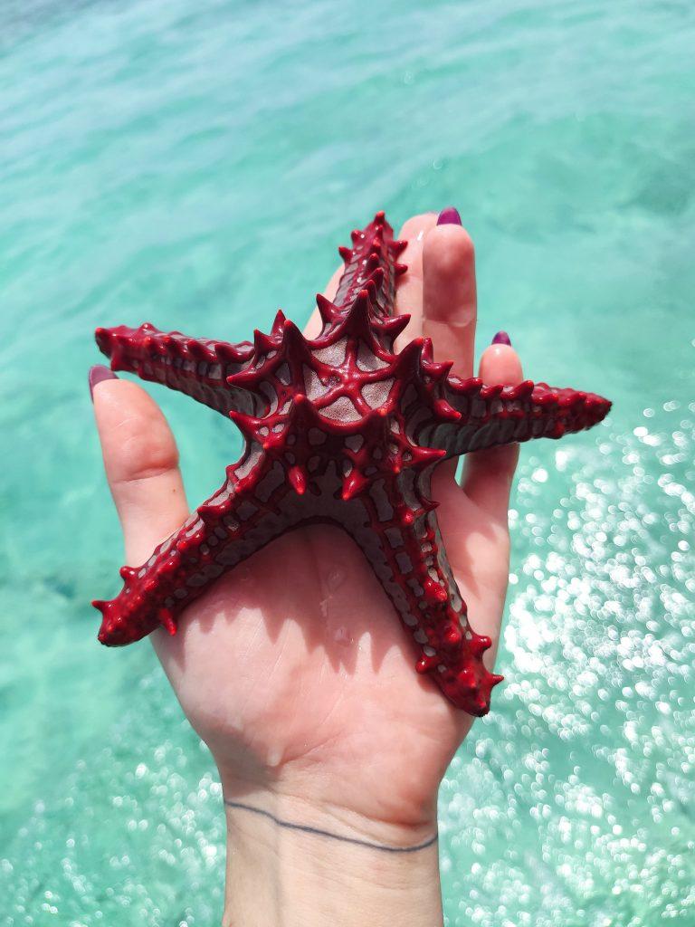 Starfish Zanzibar