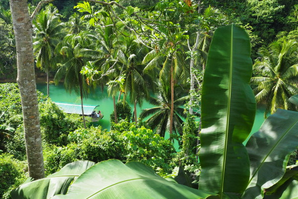 View from Nut Huts Bohol