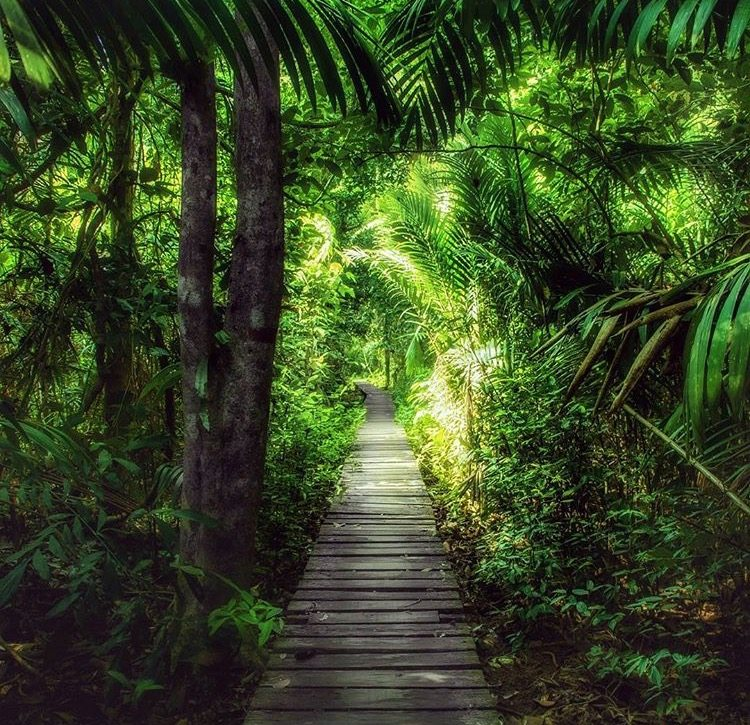 Trail bako
