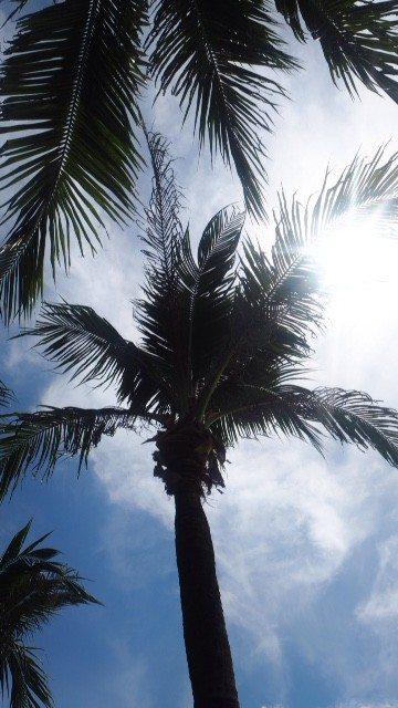 Palmtrees in Malaysia