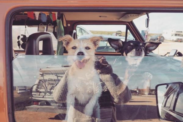 hondjesraam live in a volkswagen van