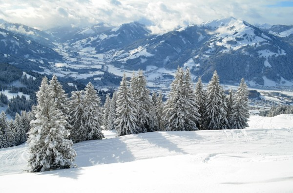 Snow on trees in Kitzbühel