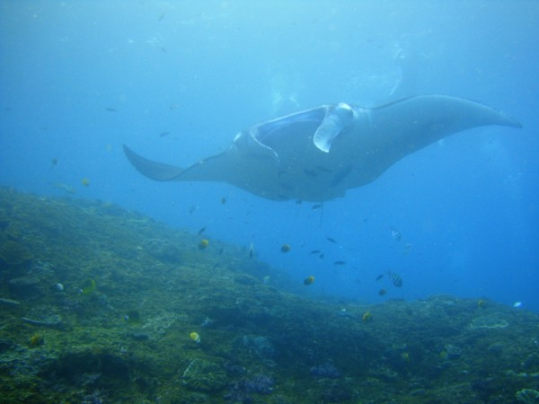 it-is-called-manta-point-for-a-reason, Bali must do's