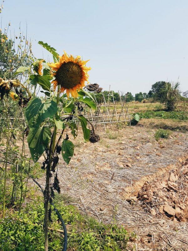Mekin Organic Farm, Khon Kaen