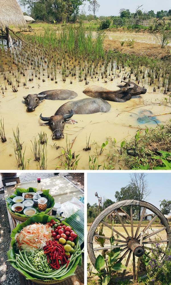 Mekin Organic Farm, Thailand