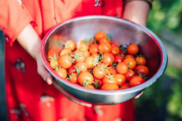 Moer tomatoes