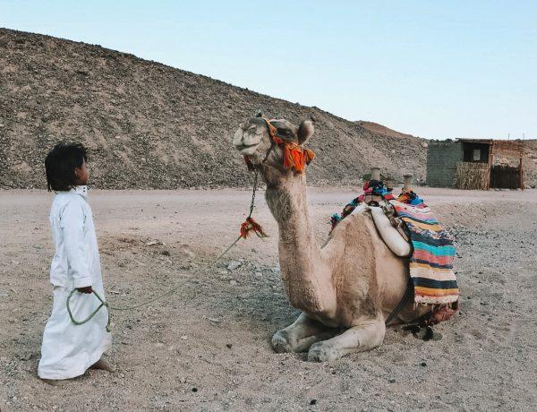 Camel El Gouna