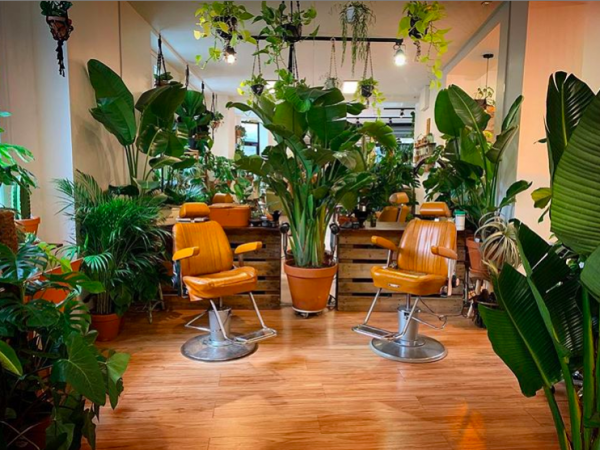 Hairdresser and plantshop