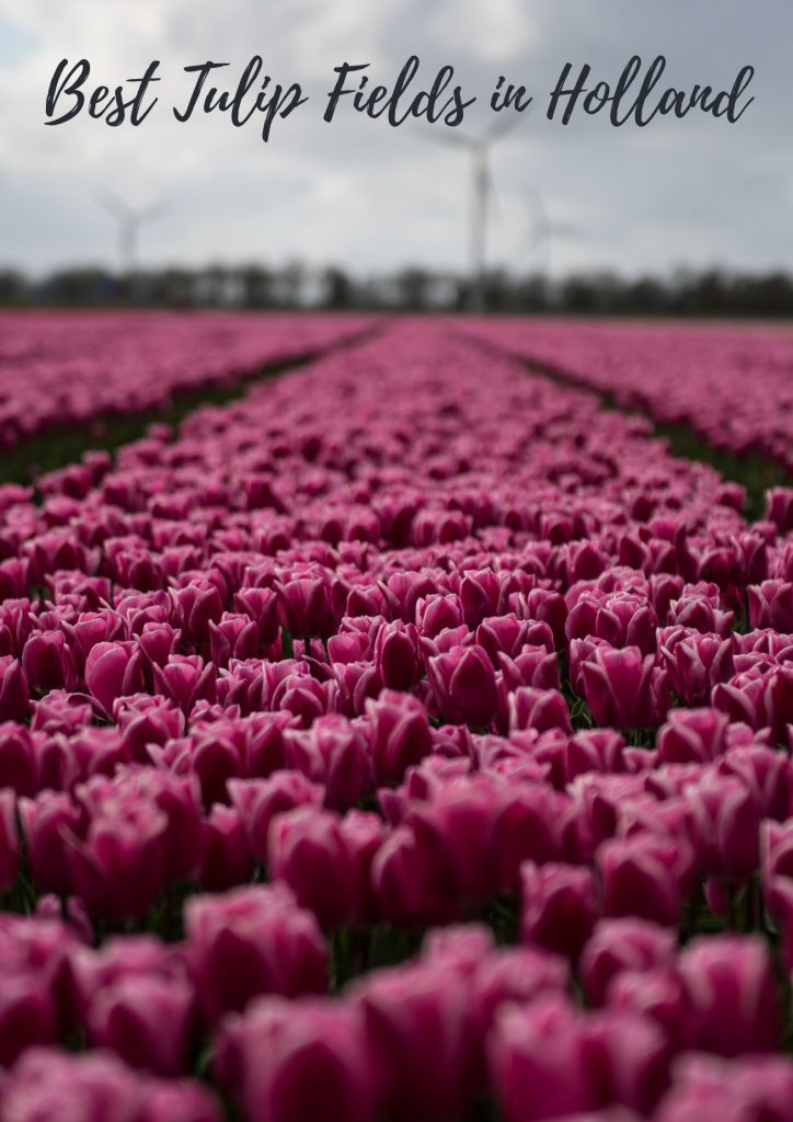 Best Tulip fields Netherlands