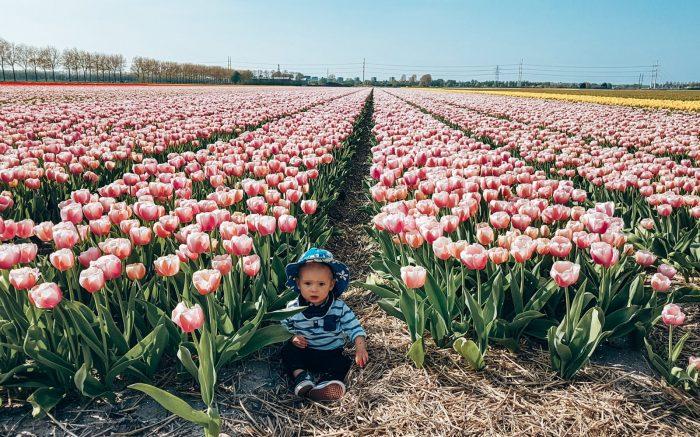 Tulip Field next to Polderbaan