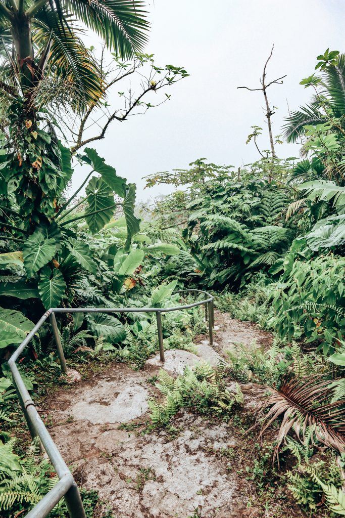 Saba Jungle