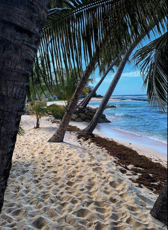 Beach on barbados