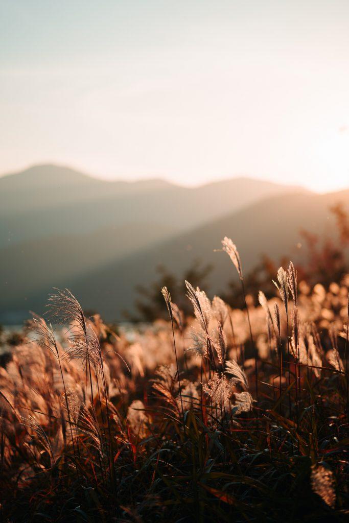sunlight good for immune system