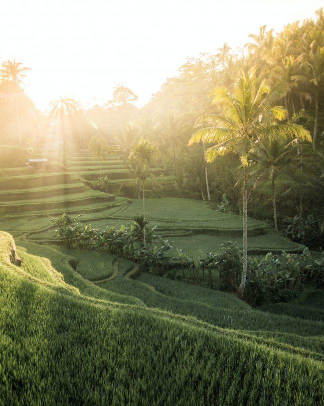 Re-opening Bali