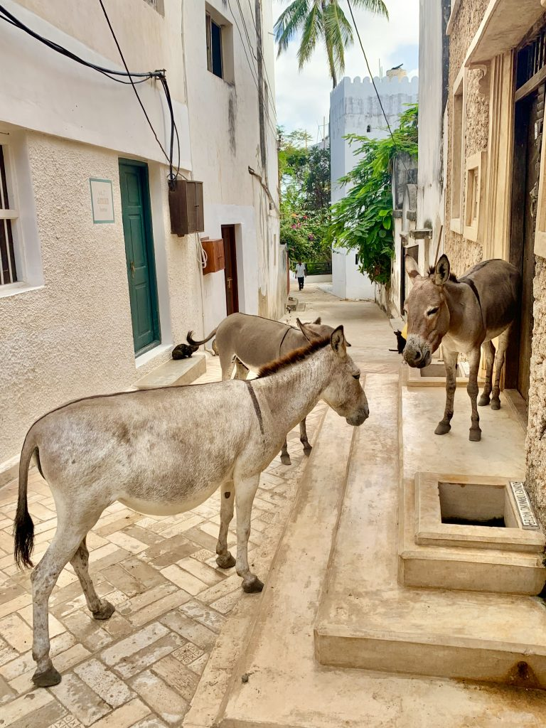 Donkeys Lamu