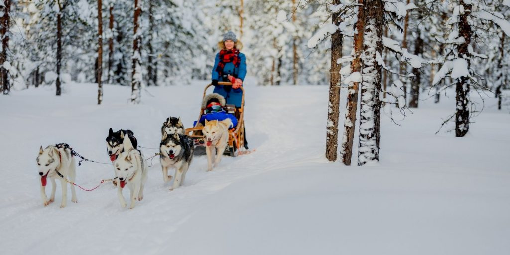 Northern Norway snowdogs